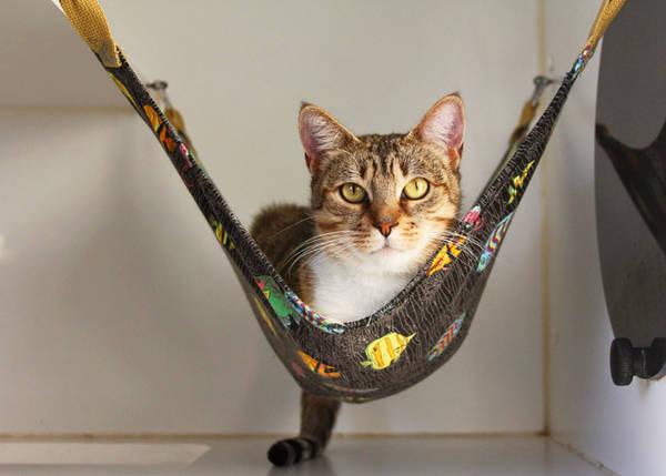 hamac pour chat gifi